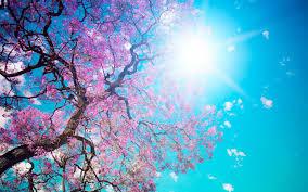Risultati immagini per fiori di primavera
