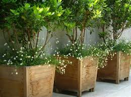 potted tall plants for patio albert