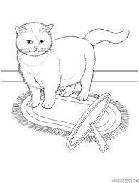 Disegni Da Colorare Gatto Somalo Con Gatto Da Colorare Per Bambini E