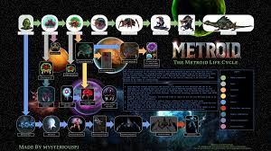 Metroid Evolution Chart Comprehensive Metroid Life Cycle And Mutations Diagram Metroid