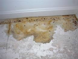 how to remedy pet urine issues on carpet