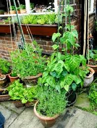 container gardening soil with vegetables in diffe pots