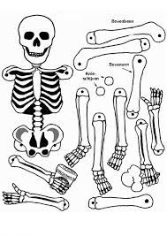 Small Picture body skeleton Colouring Pages Coloring Activities Science