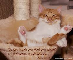 Relaxation Quotes Fascinating Sunday Quotes Relaxation The Conscious Cat