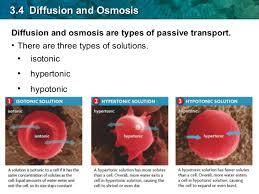 3 Types Of Passive Transport Bio Ch03 4