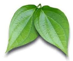 Hasil gambar untuk tanaman obat