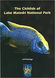 The Cichlids Of Lake Malawi National Park Amazon Co Uk Ad