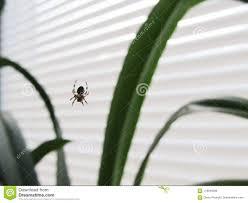 Eine Spinne Auf Einem Fenster In Einem Netz Stockbild Bild Von
