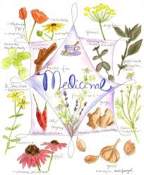 Free Herbs And Spices Clipart Clip Art Download Free Clip