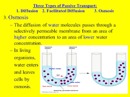 3 Types Of Passive Transport Cells Their Environment Ppt Download
