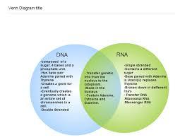 Venn Diagram Comparing Dna And Rna Dna And Rna Venn Diagram Resume Examples Resume Template