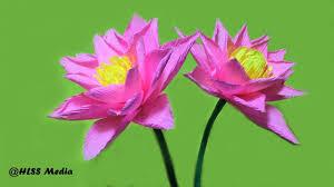 How To Make Big Lotus Flower From Paper Crepe Paper Lotus Flower Zlatan Fontanacountryinn Com