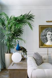 Palm Tree Decor For Living Room 17 Best Ideas About Indoor Palm Trees On Pinterest Palm Tree