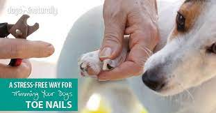 t your dog s toenails