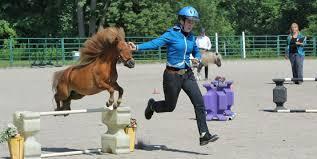 Cornell Cooperative Extension 4 H Horse Program