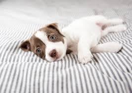 tâm trạng của chó
