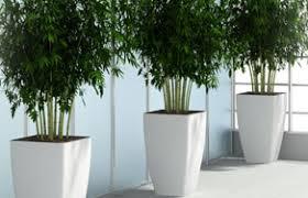 Interior office plants Gardening About Us Provincial Planters La Office Plants