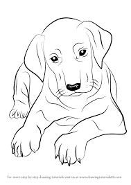 Small Picture Learn How to Draw Doberman Puppy Dogs Step by Step Drawing