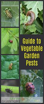 garden pest. An Easy-to-use, Straightforward Guide To Vegetable Garden Pests. Pest \