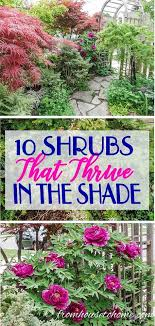 i love this list of bushes that will thrive in the shade i didn