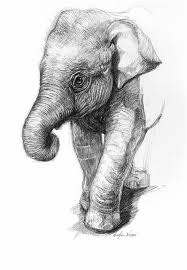 Baby Elephant Drawings Elephant Face Sketch At Paintingvalley Com Explore Collection Of