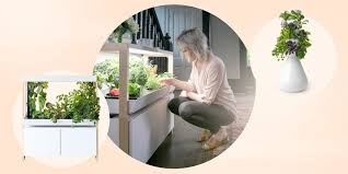 best indoor garden kits and systems of 2021
