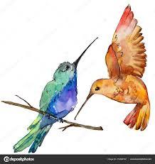 небо птица красочные колибри дикой акварель стилем изолированы дикие