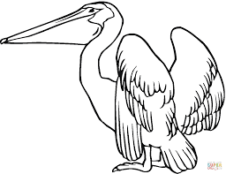 Small Picture Pelican 9 coloring page Free Printable Coloring Pages