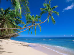 1920x1200 beach palm tree hd desktop wallpaper widescreen high pictures of palm trees wallpapers