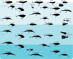 Fishing Lure Weight Chart Google Search Bass Fishing