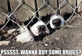 Dogs Give A Hefty Bargain For Catnip by acevesgame - Meme Center via Relatably.com