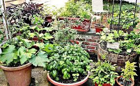 container garden. School Container Garden