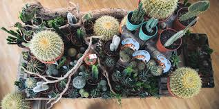 nestled in the centre of our houseplant section this large display of cacti and succulents available in a variety of diffe shapes and sizes is