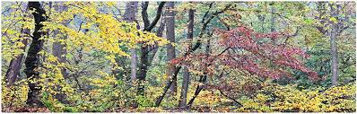 Amazon.com: Autumn Mist by Gregory O'Hanlon, 10 by 19-Inch Canvas Wall Art:  Prints: Posters & Prints