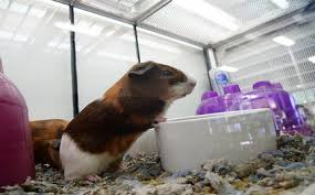 petco animals. Interesting Animals 100 Animals Die In Petco Store After Flood N