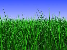grass and sky backgrounds. 3d Illustration Of Green Grass Closeup, Over Blue Sky Background, Stock Photo And Backgrounds G