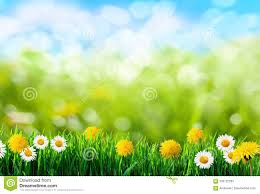 Grass and flowers background Photoshoot Green Grass And Flowers Background Dreamstimecom Green Grass And Flowers Background Stock Image Image Of Summer