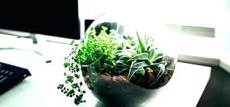 small office plant. Best Office Plants Plant Good Astonishing Desk Small