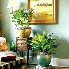 Indoor Plants For Living Room Plants For The Living Room Pleasant Living  Room With Indoor Plants .