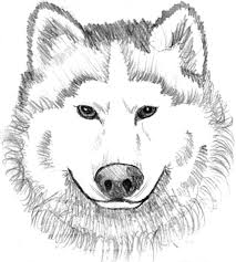 Baby Wolf Coloring Pages Printable Kids Colouring Pages Coloring