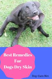 12 Home Remedies for Dogs Dry Itchy Skin - Dog-Care