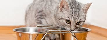 Как выбрать <b>корм для котят</b> : советы специалистов - Purina.ru