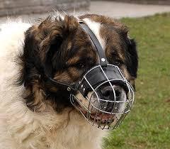 Kaukazian Ovcharka Wire Basket Dog Muzzles Size Chart