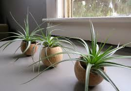 View in gallery Set of natural seed pod containers from Air Plant Design  Center
