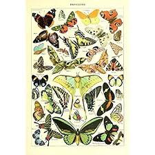 Vintage Poster Print Art Butterflies Of The World Breeds Collection Old Scientific Chart Butterfly Home Wall Decor 12 99 X 19 69