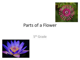Flower Powerpoint Ppt Parts Of A Flower Powerpoint Presentation Id 2362917
