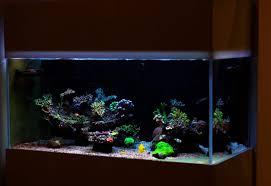75 gallon aquarium our top five best