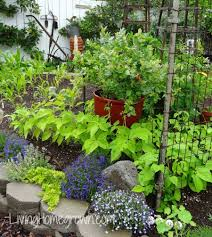 how to plant garden. Garden Design With Living Homegrown How To Plant Sod From Livinghomegrown.com