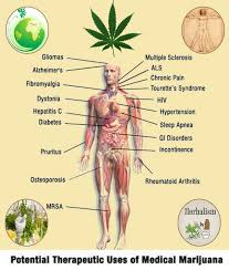marijuana benefits over disadvantages medical cannabis and marijuana benefits over disadvantages