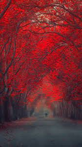 Red October Forest Pathway iPhone 6 ...